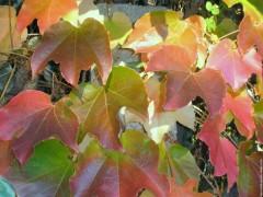 galerie-membre,feuille,couleurs-d-automne-079.jpg